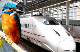 bird and Japanese high speed bullet train