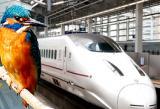 bird and Japanese high speed bullet train