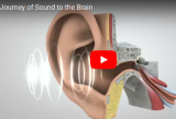 Soundwaves going into ear