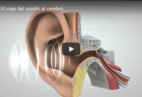 Una ilustración del oído humano que muestra las estructuras internas del conducto auditivo.